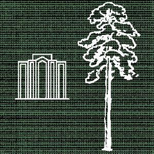 sequoia-tree-vs.-the-darling